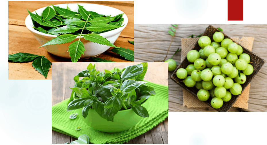 health benefits of tulsi , neem and amla